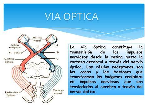 imagenes de las vias visuales via optica