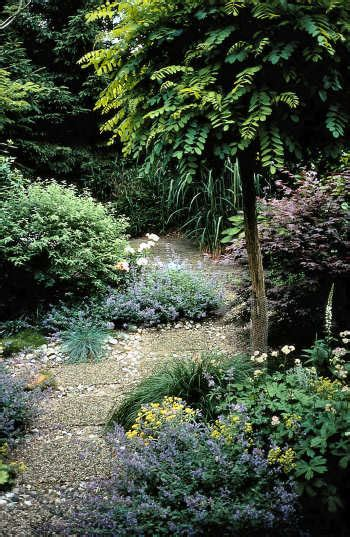 small trees for growing in gardens growing tips buy on