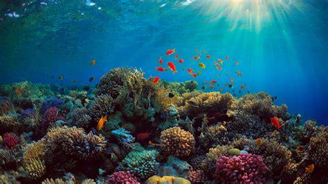 sea corals fish underwater  iphone