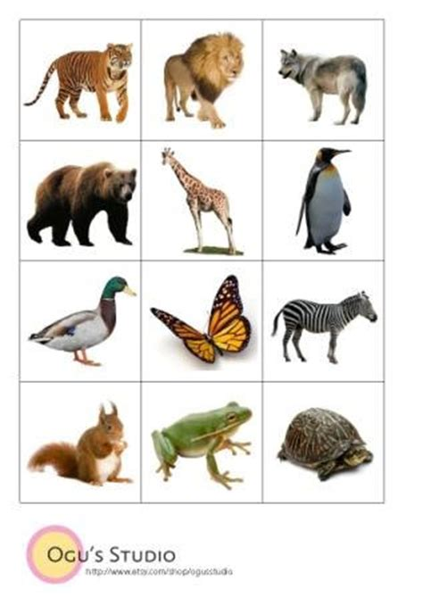 printable animal memory game cards items similar to instant download animal flash cards