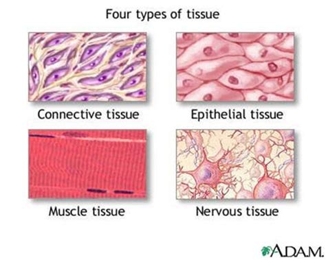tissue sectioning methods notes summary home page