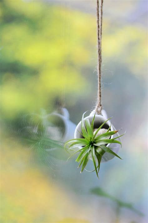 best small hanging plants 17 best ideas about hanging succulents on pinterest