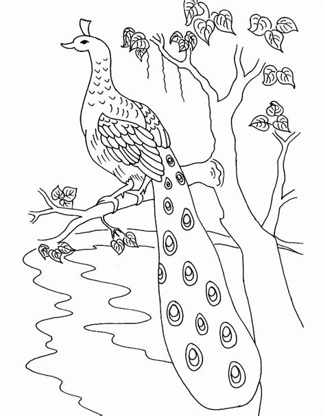 beautiful coloring pages for adults coloring home