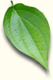 nadila white bagian bagian tumbuhan  fungsinya