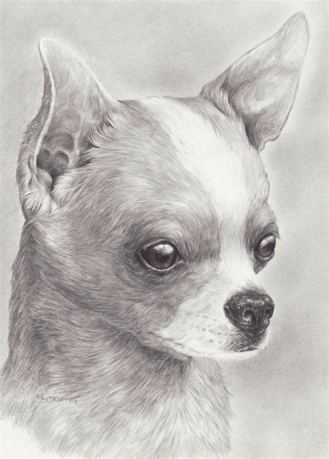 Cabins Plans And Designs fine chihuahua drawing by laurie mcginley