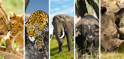 Big Picture Post Nation 5 by A La D 233 Couverte Des Incontournables En Afrique Du Sud
