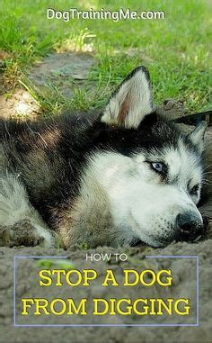 why do dogs dig holes in the backyard 1000 images about dog stuff on pinterest your dog pets