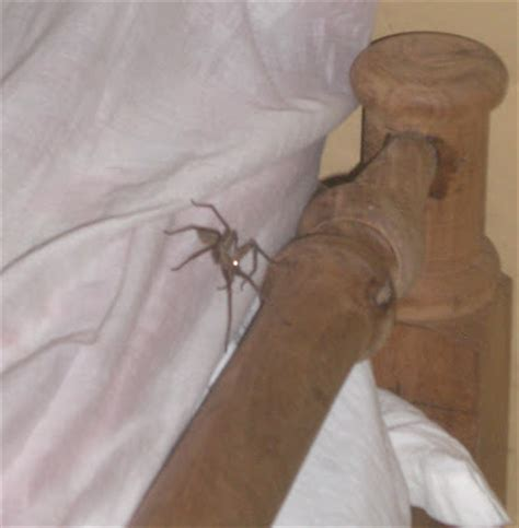 spider in my bed identify this mutant page 2 neogaf