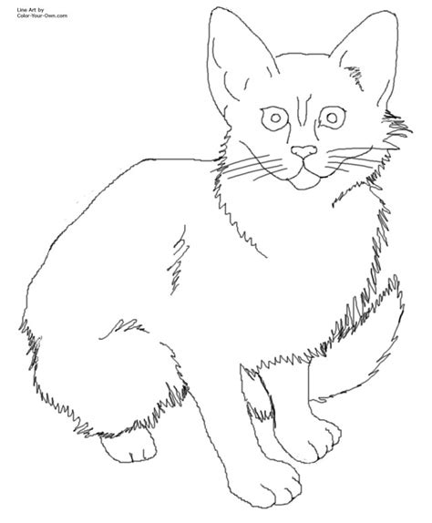 coloring pages of real cats big cat coloring pages az coloring pages