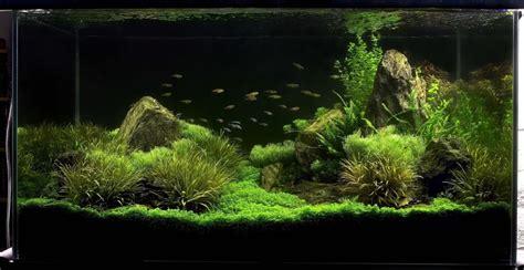 iwagumi aquascape inspirational iwagumi aquascapes uk aquatic plant society