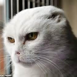 un chat errant devient c 233 l 232 bre il ressemble 224 lord