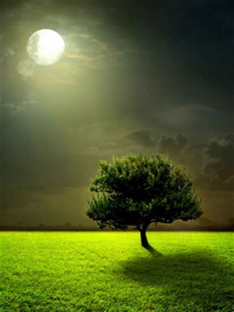 nature themes download for mobile download mobiles softwares wallpaper themes nature wallpaper
