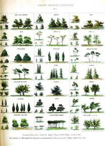 tree types vintage tree identification chart everything homeschool