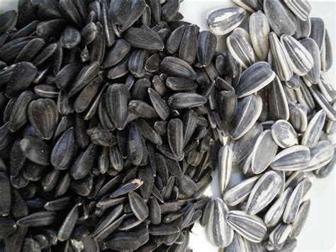 black sunflower seeds and goats 47 best equine nutrition images on diet