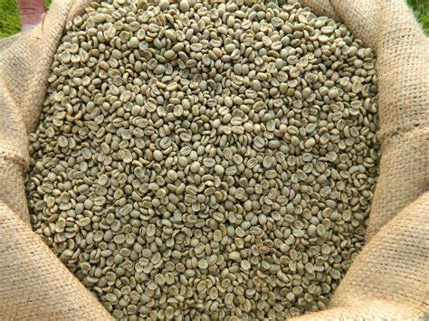 Green Coffee Bean costa rica arabica green coffee bean cafe hormozi