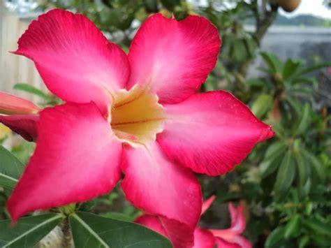 gambar bunga teratai foto bugil bokep