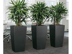 House Plant Pots Large House Plant Pots Home Design Ideas