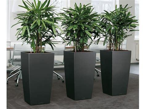large house plants large house plant pots home design ideas