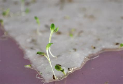 Seed Paper - green printing on plantable seed paper that blooms when