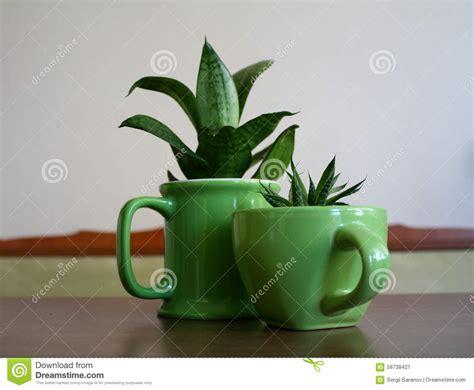 vasi originali vasi originali vasi per piante aromatiche vasi terracotta