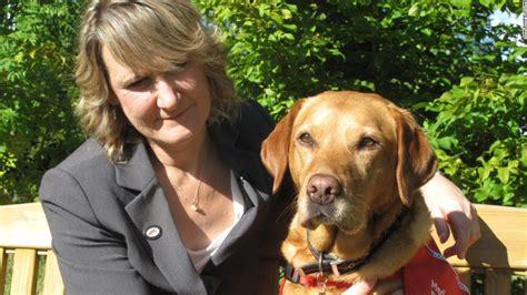 golden retriever lump on chest labrador retrievers named america s most popular cnn