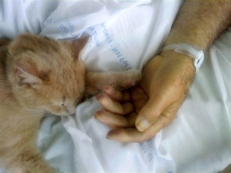 comforting cat how tom the cat brings comfort to dying patients with his