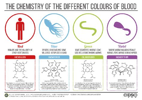 octopus blood color what is an octopus s blood color how is an octopus s