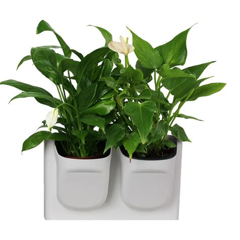 vertical greening combination wall mounted flower pots