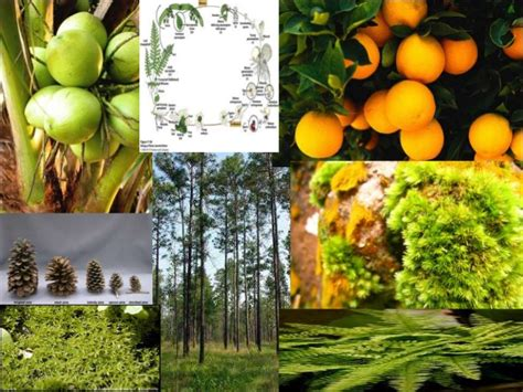 kingdom plantae dunia tumbuhan biologi dunia tumbuhan plantae