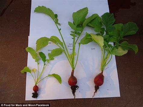 vegetables grown in vegetables grown in martian soil found to be safe to eat