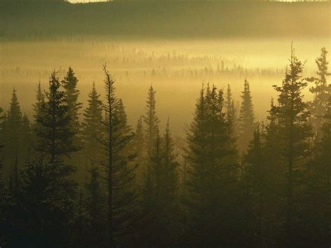 imagenes hd bosques wallpaper bosques hd taringa