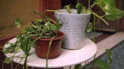 bauhaus terrassenüberdachung pflanzen hinterhof dekor