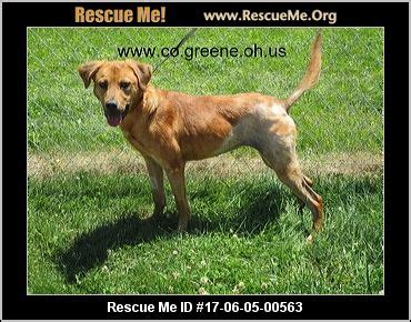 golden retriever rescue dayton ohio ohio golden retriever rescue adoptions rescueme org