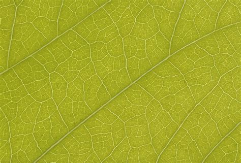 leaf pattern photoshop textures free stock leaf textures cg textures free