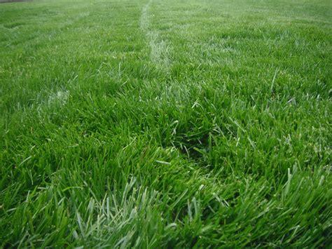 Soft Grass photo phriday beautiful green grass determinedindeed