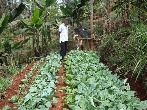 Kitchen Garden Farming In Kenya Photo Gallery Anglican Development Services Mt Kenya