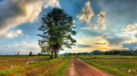 country road field lonely tree grass white sky cloud