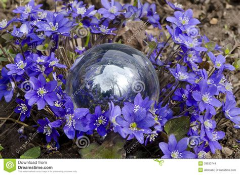 fiori a palla viola palla viola dei fiori della primavera e di cristallo