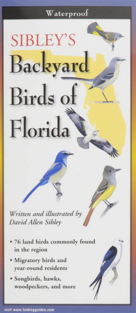florida birds identification birds of prey