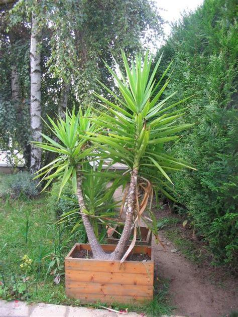 Yuka Plante D Intérieur by Yucca 224 L Ext 233 Rieur C Est Possible