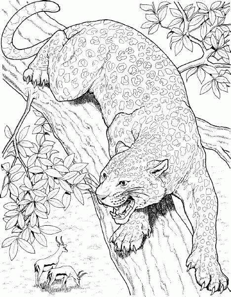 realistic jaguar coloring pages cheetah coloring pages coloringpages1001 com