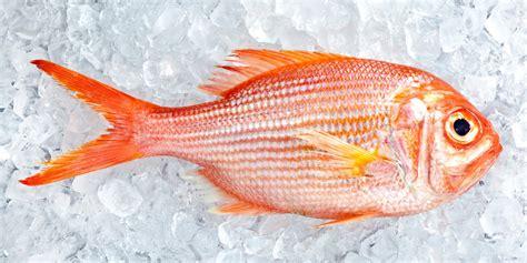 gambar ikan yang sangat indah kumpulan gambar
