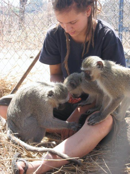 vervet monkey foundation wikipedia