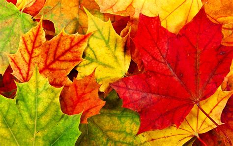 colorful leaves free colorful leaves wallpaper 30080 1920x1200 px
