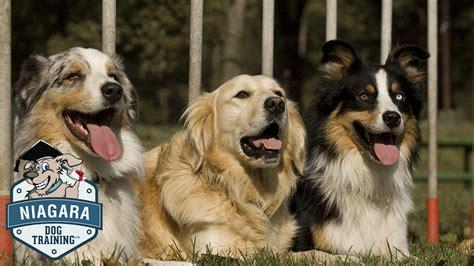niagara dogs niagara ltd services in st catharines and the niagara