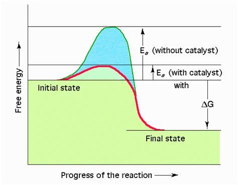 enzyme diagram biology 1106 gt huggins gt flashcards gt biology 1106 test 3