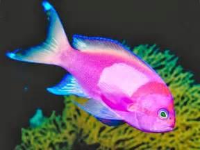 Fish S Tropical Fish Animals Photos