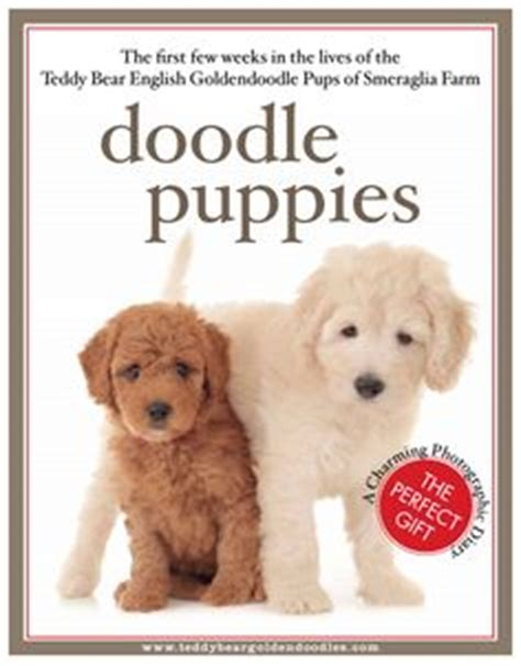 goldendoodle puppy books fletcher the teddy goldendoodle