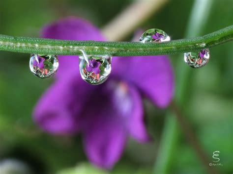 petali fiori petali e fiori riflessi in una goccia d acqua acqua