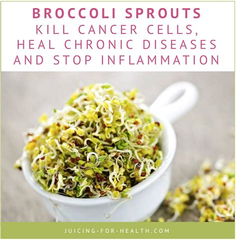 Broccoli Sprouts Helath Benefits Detox by Broccoli Sprout Juice Fights Cancer How To Use It